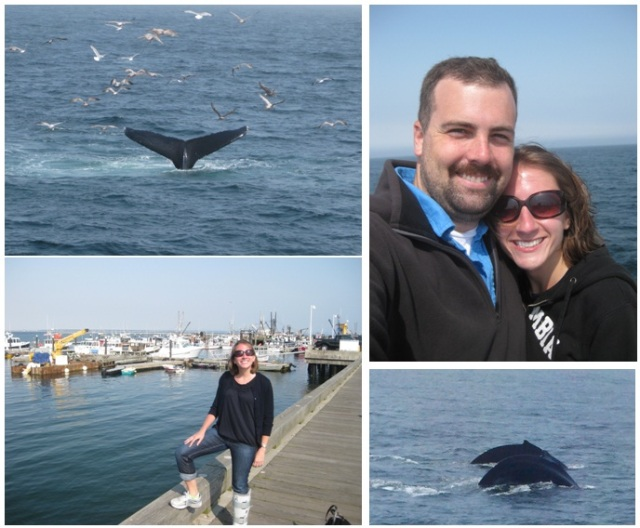 Cape Cod - Provincetown Whale Watching