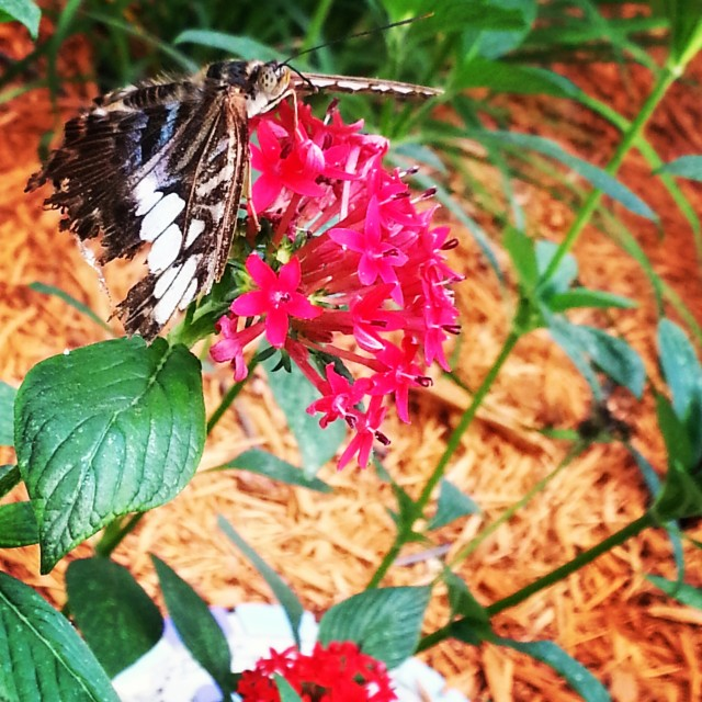 We saw some gorgeous butterflies in the steamy Butterfly House.