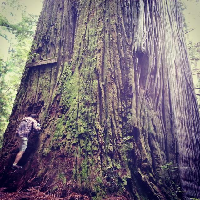 B climbing the Boy Scout Tree