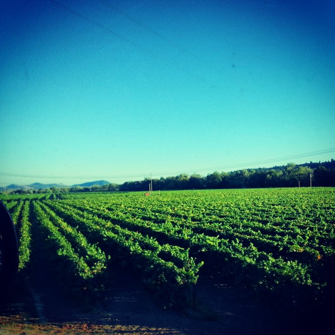 gorgeous views along the drive - wine country