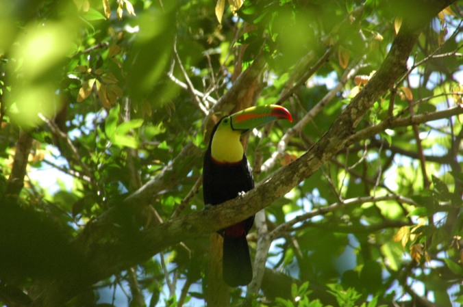 We saw toucans!