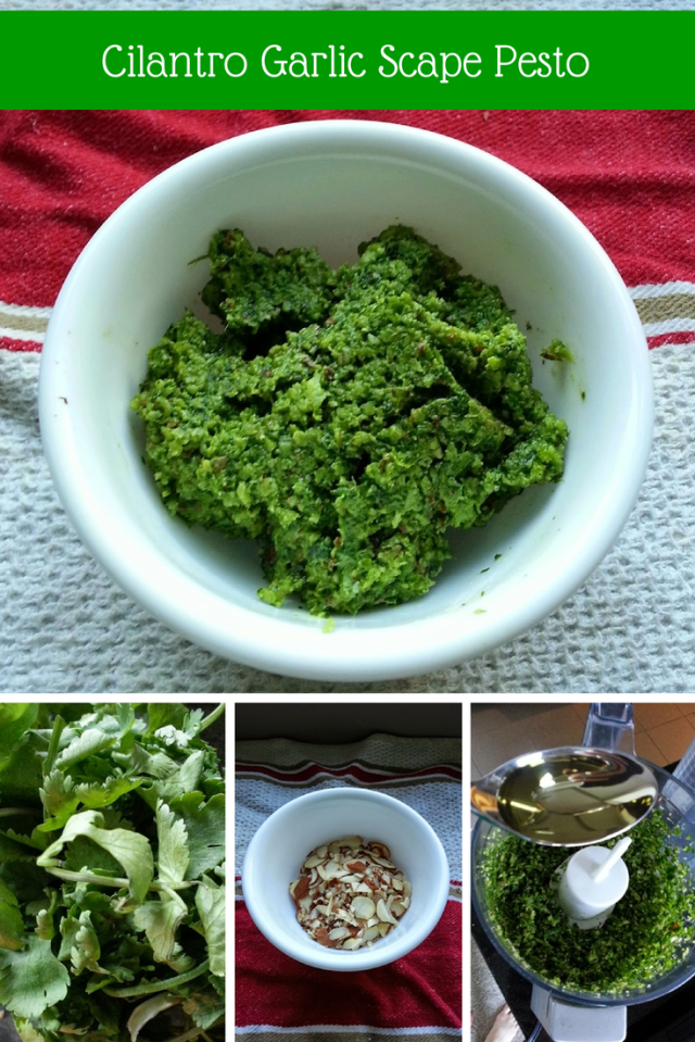 Meatless Monday: Cilantro Garlic Scape Pesto
