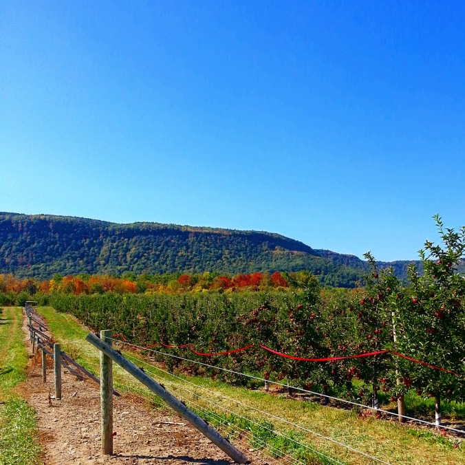 indian ladder farms apple picking in upstate new york