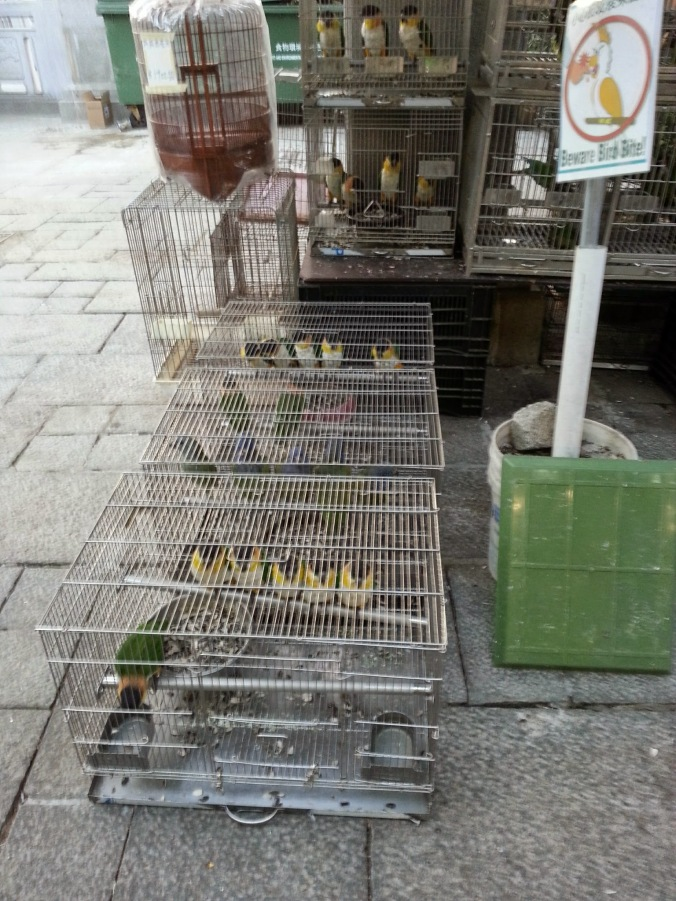 one of the many bird cages on this street in kowloon