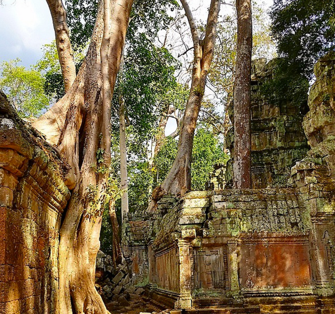 trees at Ta Prohm