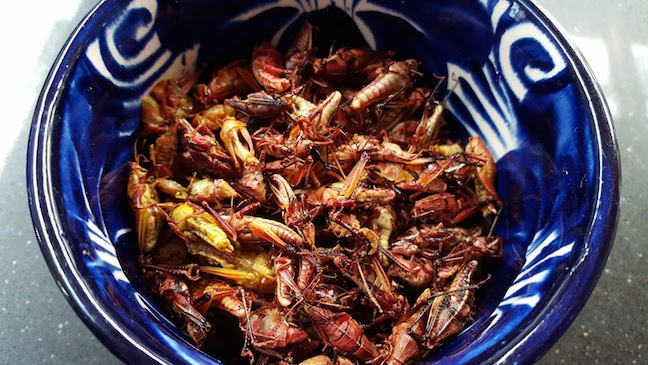 grasshoppers up close.